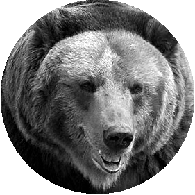 the_bear_sw_290